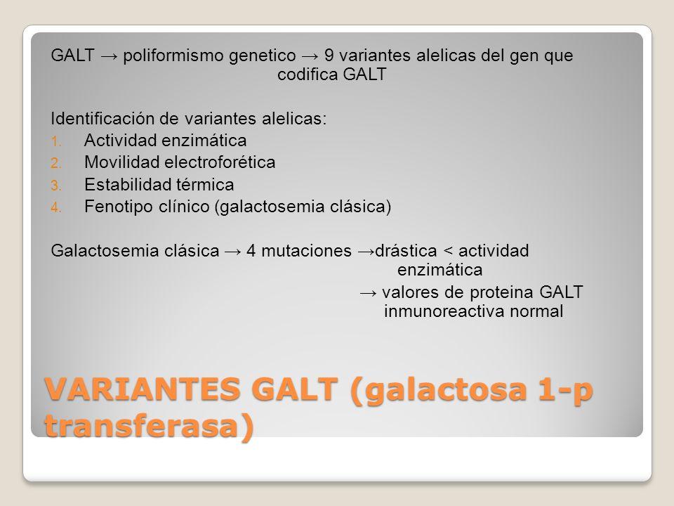 VARIANTES GALT (galactosa 1-p transferasa)