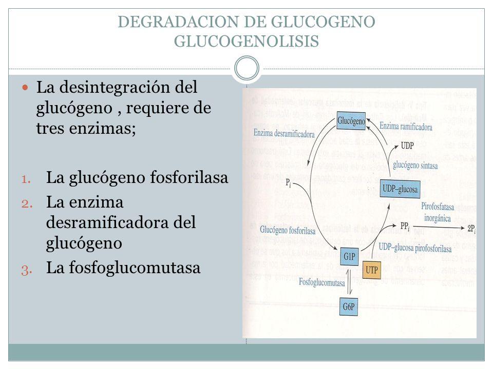 DEGRADACION DE GLUCOGENO GLUCOGENOLISIS