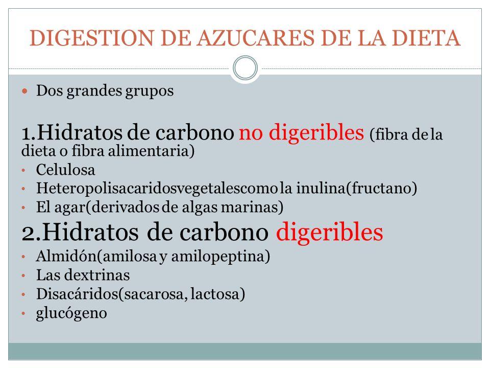 DIGESTION DE AZUCARES DE LA DIETA