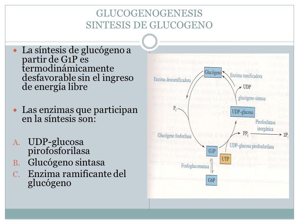 GLUCOGENOGENESIS SINTESIS DE GLUCOGENO