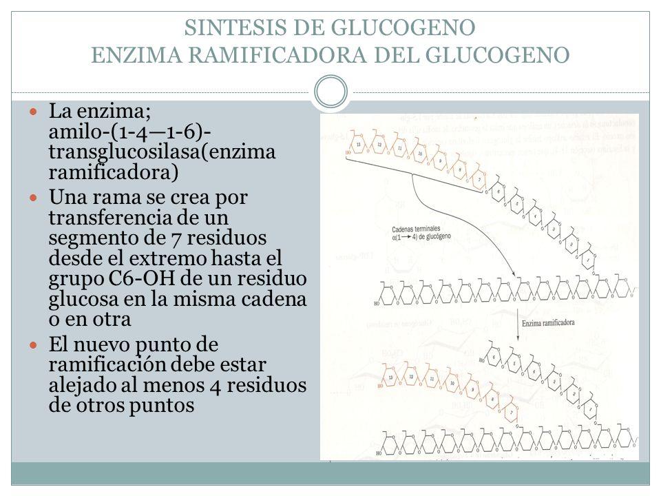 SINTESIS DE GLUCOGENO ENZIMA RAMIFICADORA DEL GLUCOGENO
