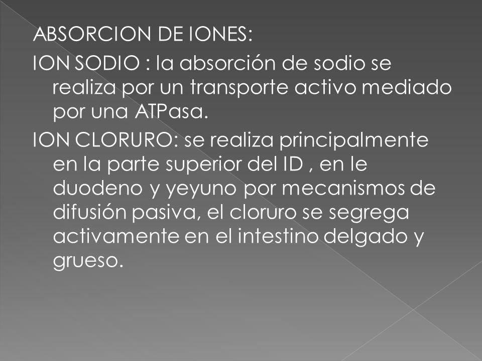 ABSORCION DE IONES: ION SODIO : la absorción de sodio se realiza por un transporte activo mediado por una ATPasa.