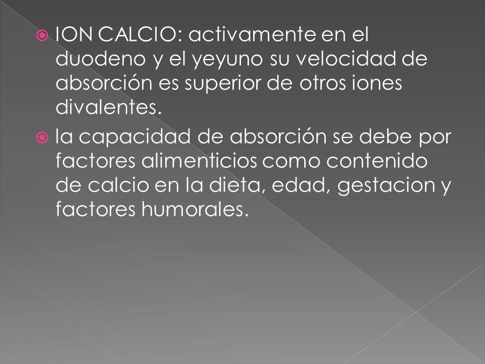 ION CALCIO: activamente en el duodeno y el yeyuno su velocidad de absorción es superior de otros iones divalentes.