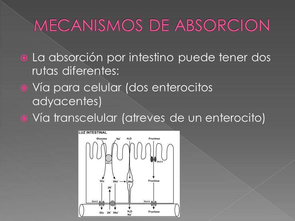 MECANISMOS DE ABSORCION