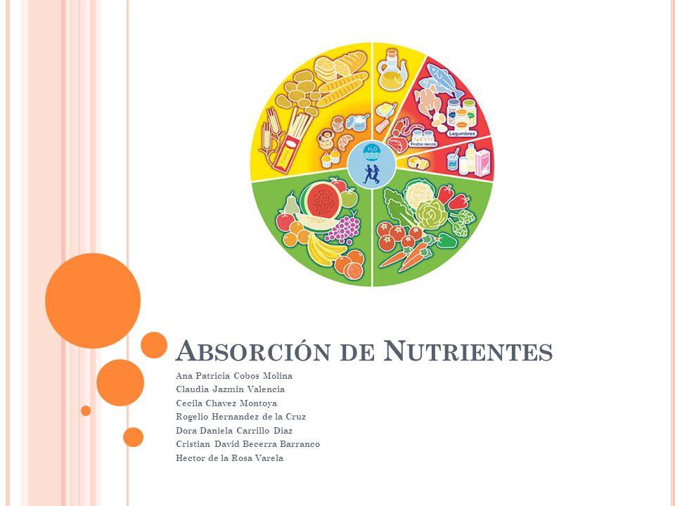 Absorción de Nutrientes