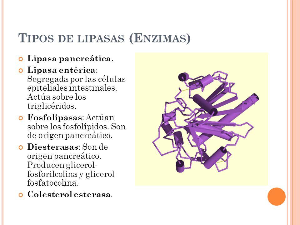 Tipos de lipasas (Enzimas)