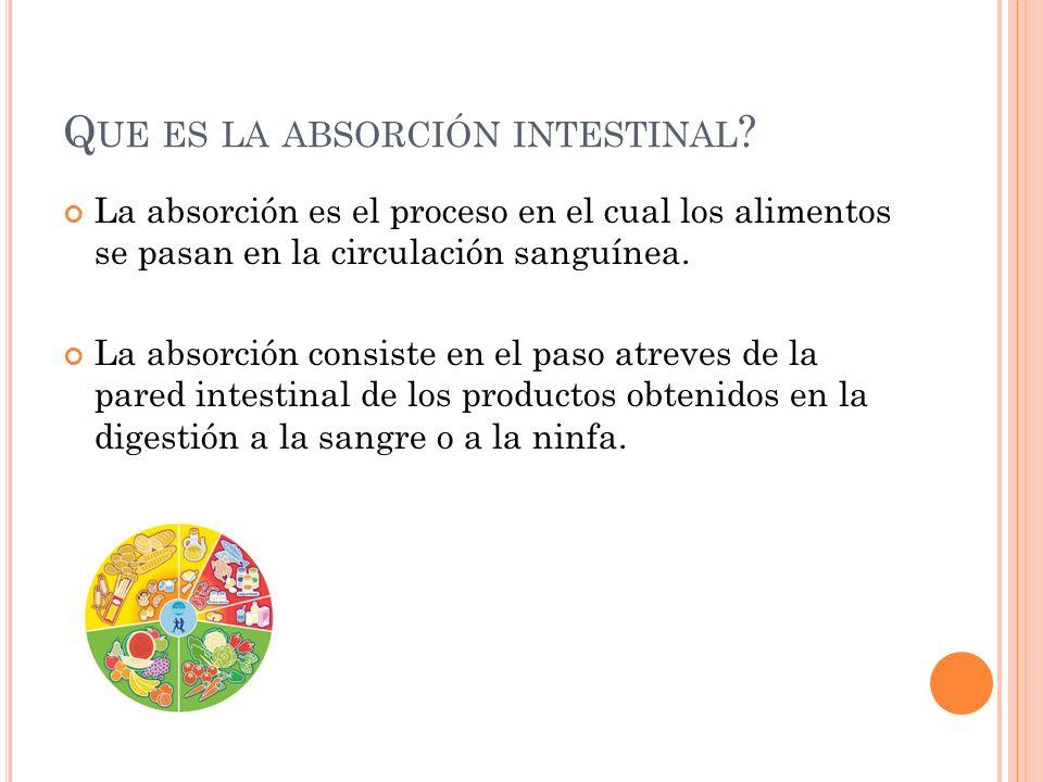 Que es la absorción intestinal
