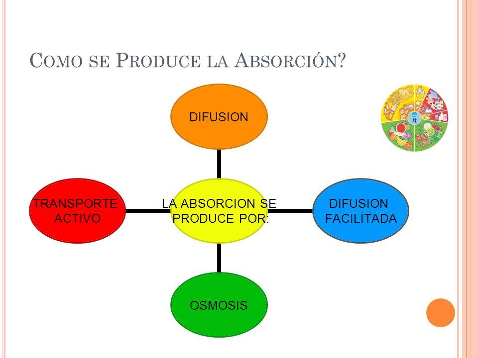 Como se Produce la Absorción