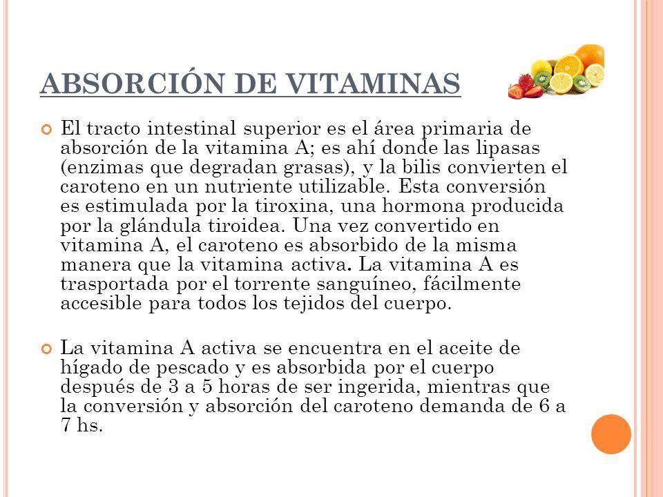 ABSORCIÓN DE VITAMINAS