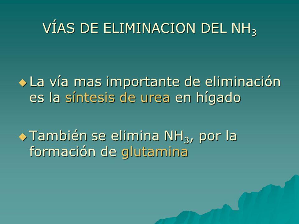 VÍAS DE ELIMINACION DEL NH3