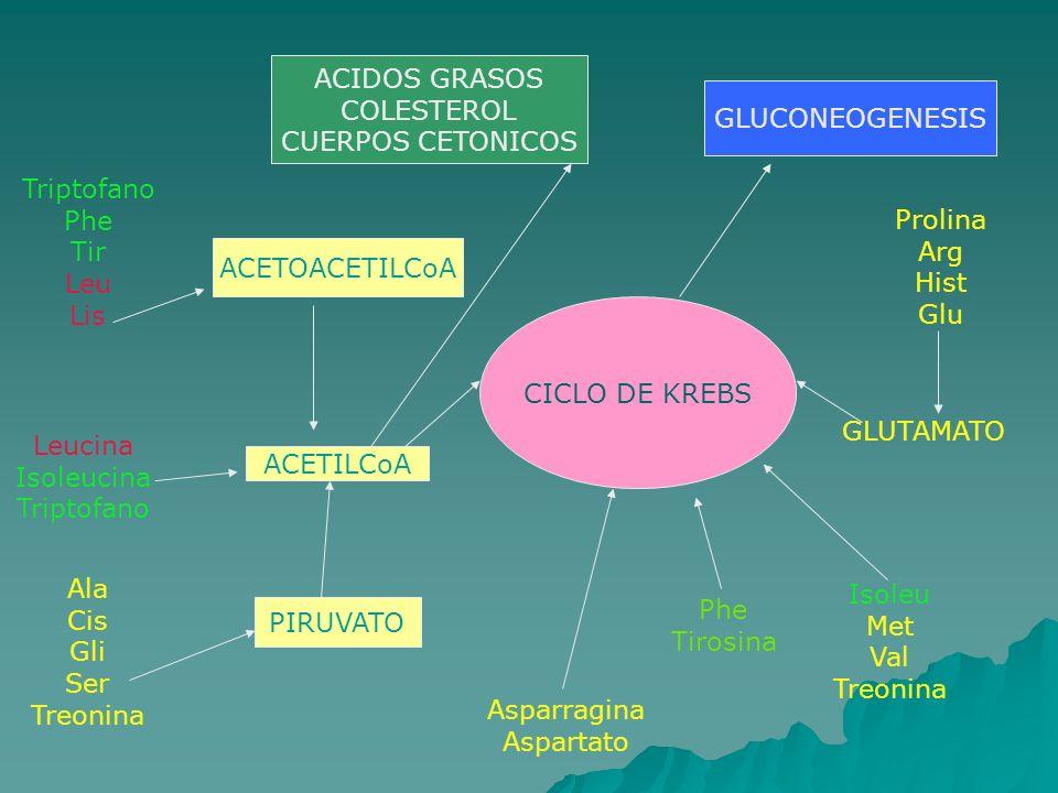 ACIDOS GRASOS COLESTEROL. CUERPOS CETONICOS. GLUCONEOGENESIS. Triptofano. Phe. Tir. Leu. Lis.