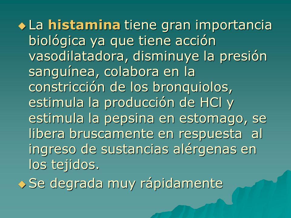 La histamina tiene gran importancia biológica ya que tiene acción vasodilatadora, disminuye la presión sanguínea, colabora en la constricción de los bronquiolos, estimula la producción de HCl y estimula la pepsina en estomago, se libera bruscamente en respuesta al ingreso de sustancias alérgenas en los tejidos.