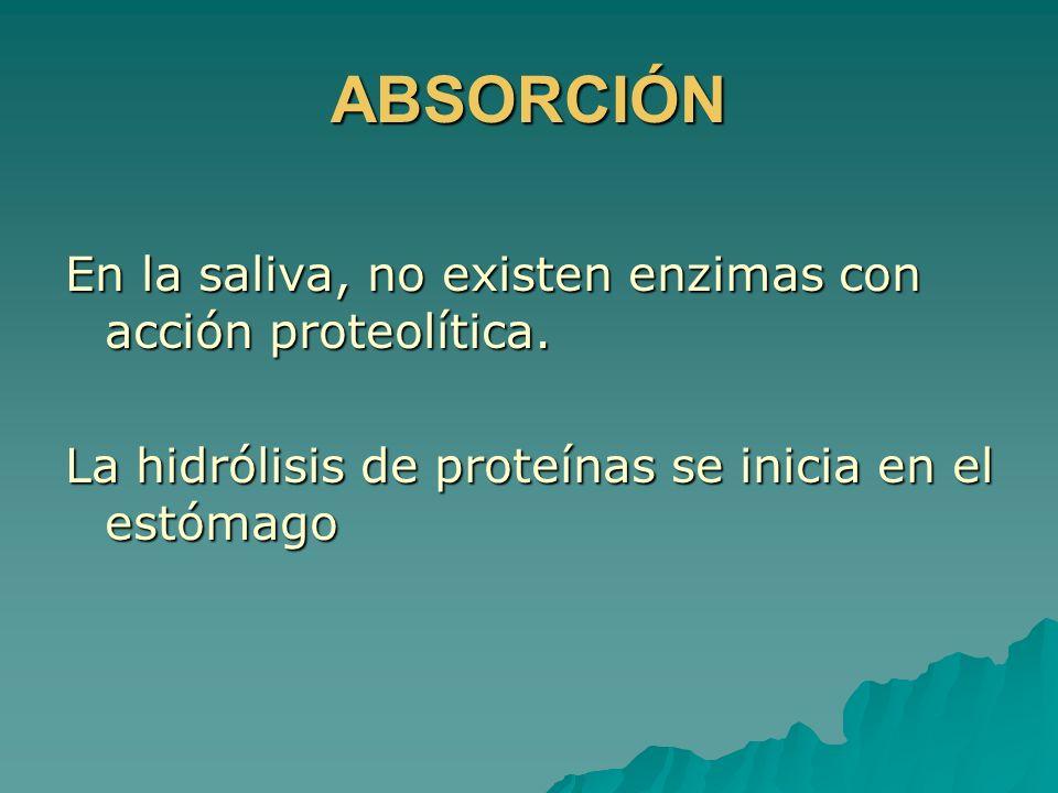 ABSORCIÓN En la saliva, no existen enzimas con acción proteolítica.