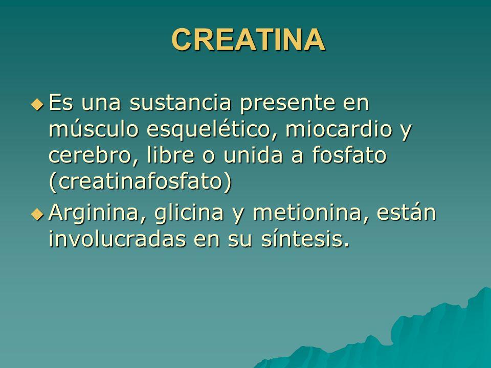 CREATINA Es una sustancia presente en músculo esquelético, miocardio y cerebro, libre o unida a fosfato (creatinafosfato)