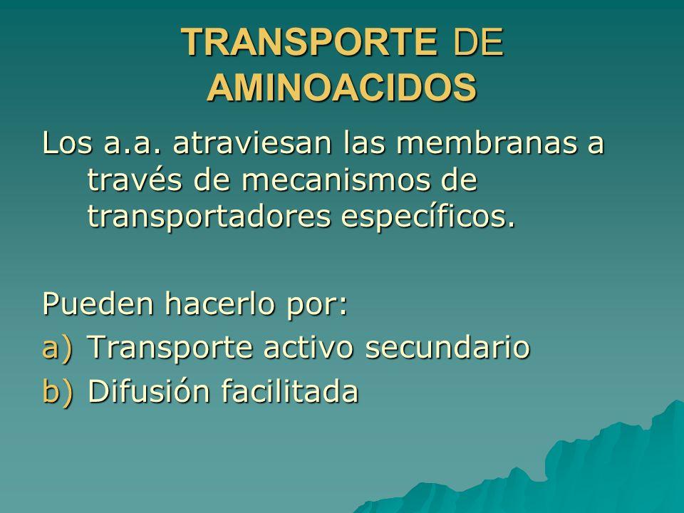 TRANSPORTE DE AMINOACIDOS