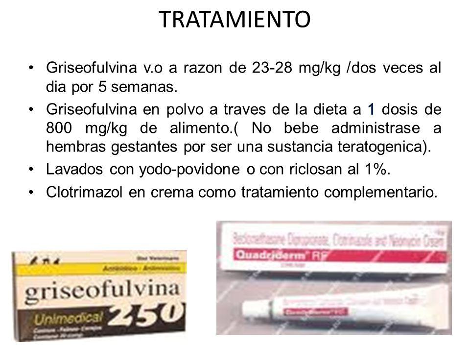 TRATAMIENTO Griseofulvina v.o a razon de 23-28 mg/kg /dos veces al dia por 5 semanas.