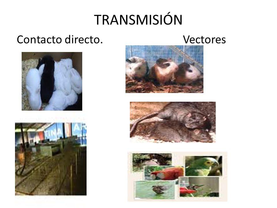 TRANSMISIÓN Contacto directo. Vectores