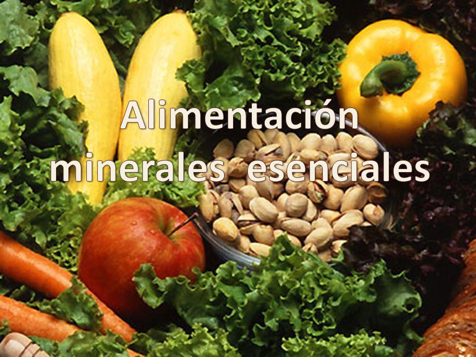 Alimentación minerales esenciales