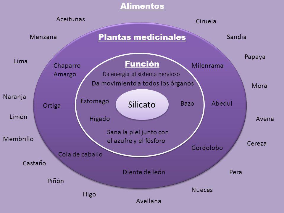 Silicato Alimentos Plantas medicinales Función Aceitunas Ciruela