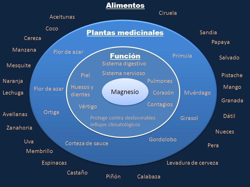 Alimentos Plantas medicinales Función Magnesio Ciruela Aceitunas Coco