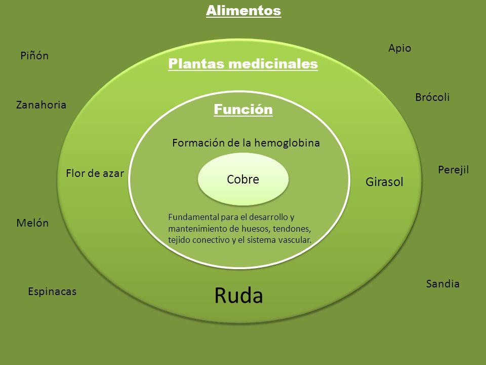 Ruda Alimentos Plantas medicinales Función Cobre Girasol Apio Piñón
