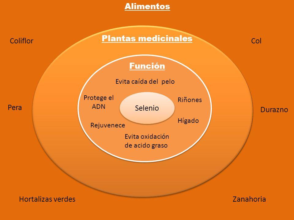 Alimentos Plantas medicinales Coliflor Col Función Selenio Pera