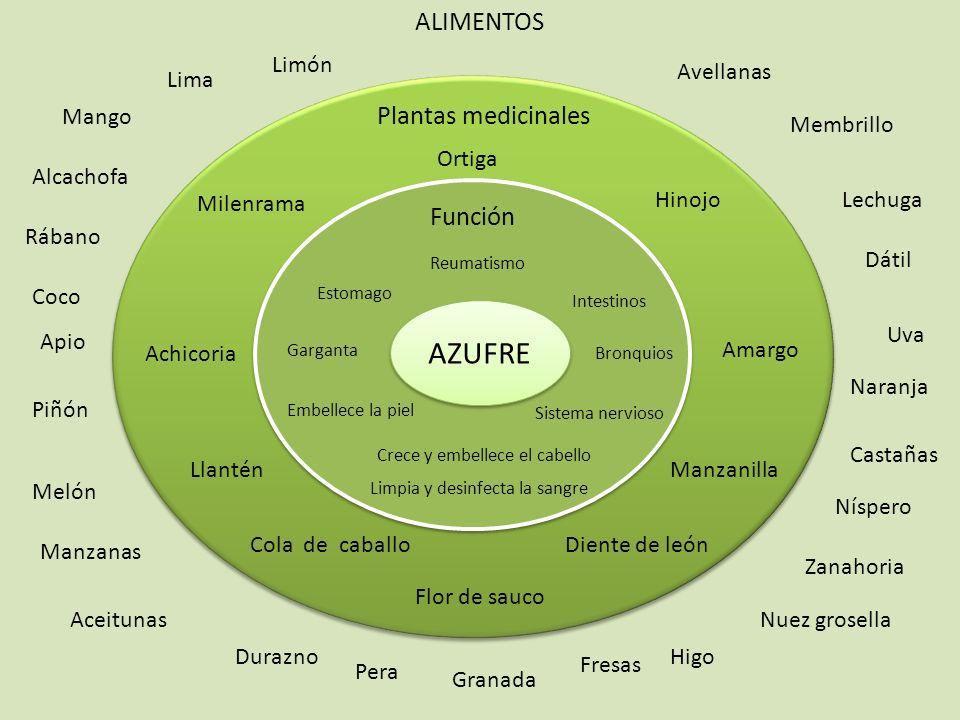 AZUFRE ALIMENTOS Plantas medicinales Función Limón Avellanas Lima