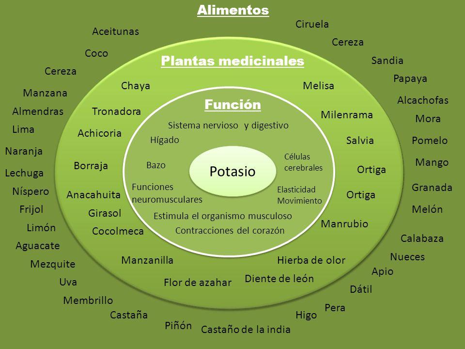 Potasio Alimentos Plantas medicinales Función Ciruela Aceitunas Cereza