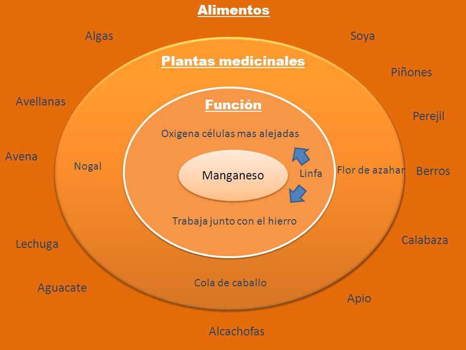 Alimentos Algas Soya Plantas medicinales Piñones Avellanas Función