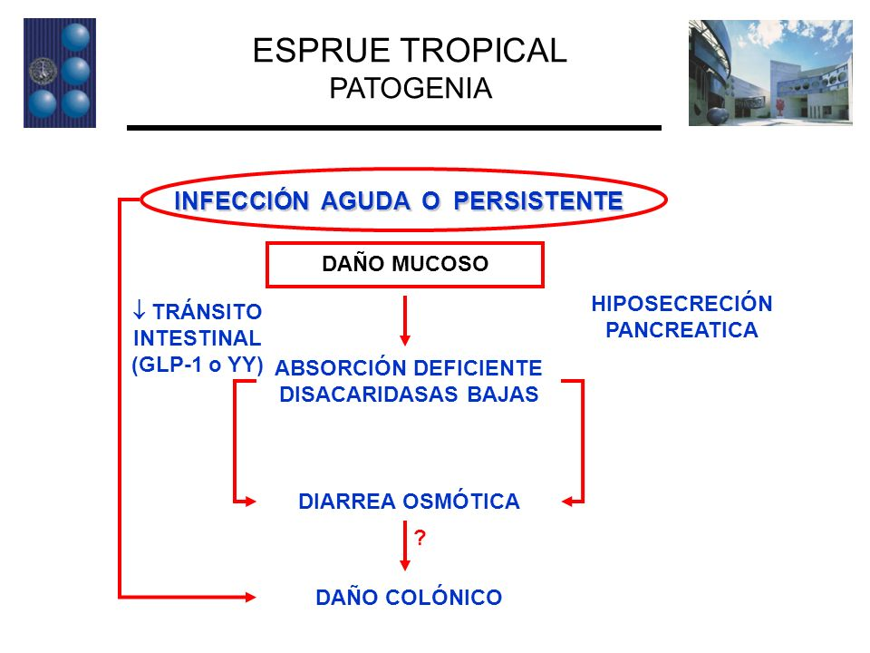 HIPOSECRECIÓN PANCREATICA  TRÁNSITO INTESTINAL (GLP-1 o YY)