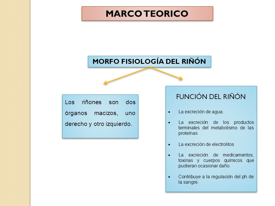 MORFO FISIOLOGÍA DEL RIÑÓN