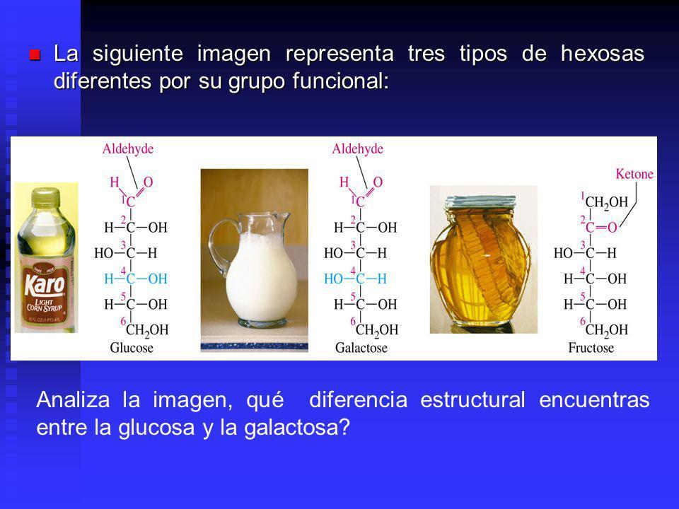 La siguiente imagen representa tres tipos de hexosas diferentes por su grupo funcional: