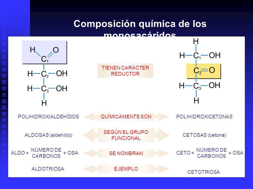 Composición química de los monosacáridos