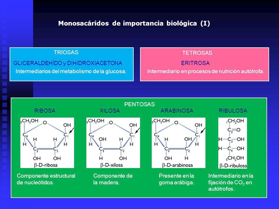 Monosacáridos de importancia biológica (I)