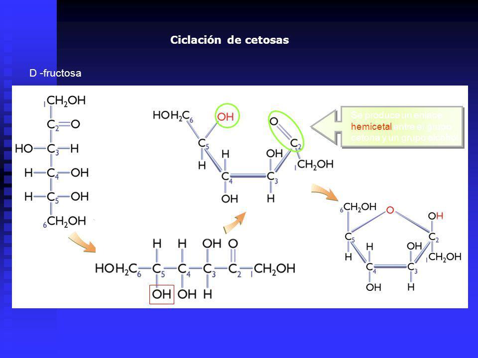 Ciclación de cetosas D -fructosa