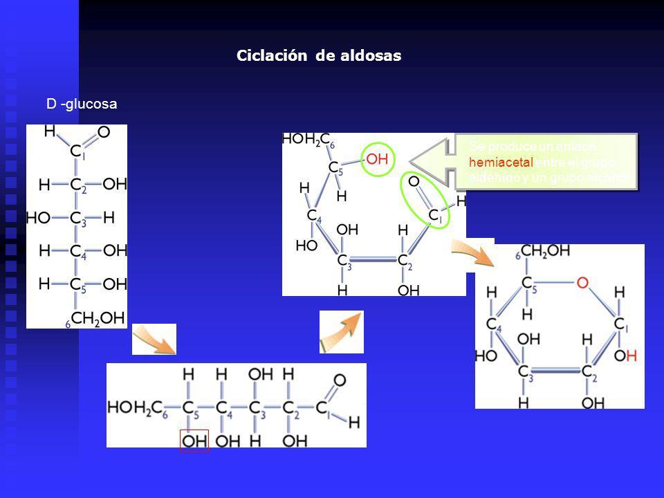 Ciclación de aldosas D -glucosa