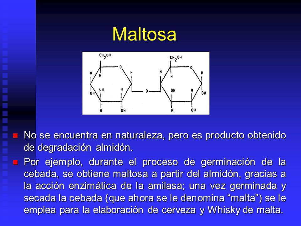 Maltosa No se encuentra en naturaleza, pero es producto obtenido de degradación almidón.
