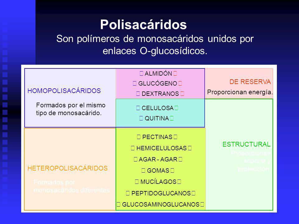 Polisacáridos Son polímeros de monosacáridos unidos por enlaces O-glucosídicos. • ALMIDÓN • DE RESERVA.