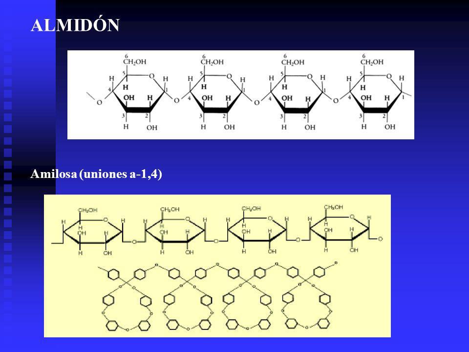 ALMIDÓN Amilosa (uniones a-1,4)