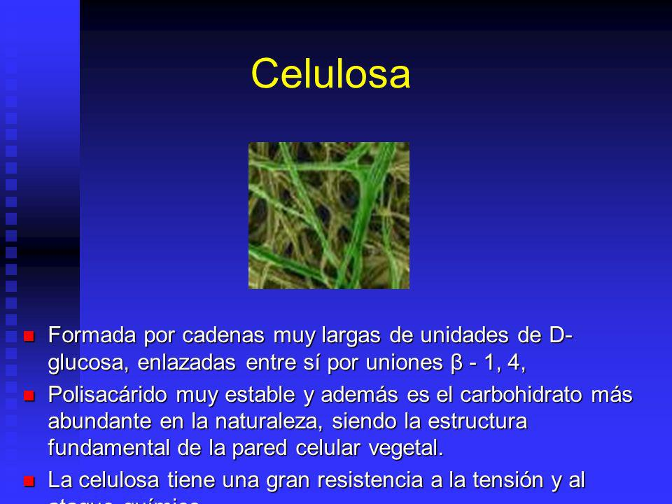 Celulosa Formada por cadenas muy largas de unidades de D-glucosa, enlazadas entre sí por uniones β - 1, 4,