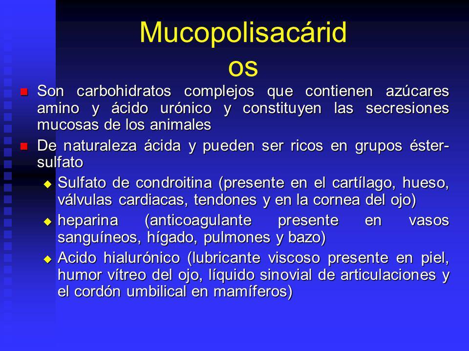 Mucopolisacáridos Son carbohidratos complejos que contienen azúcares amino y ácido urónico y constituyen las secresiones mucosas de los animales.
