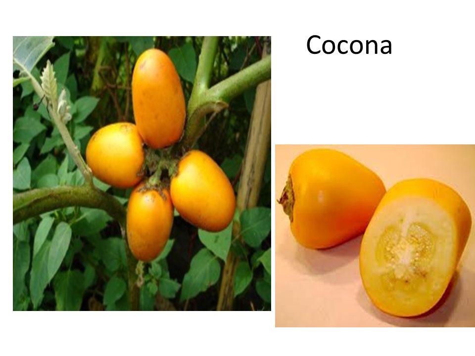 Cocona