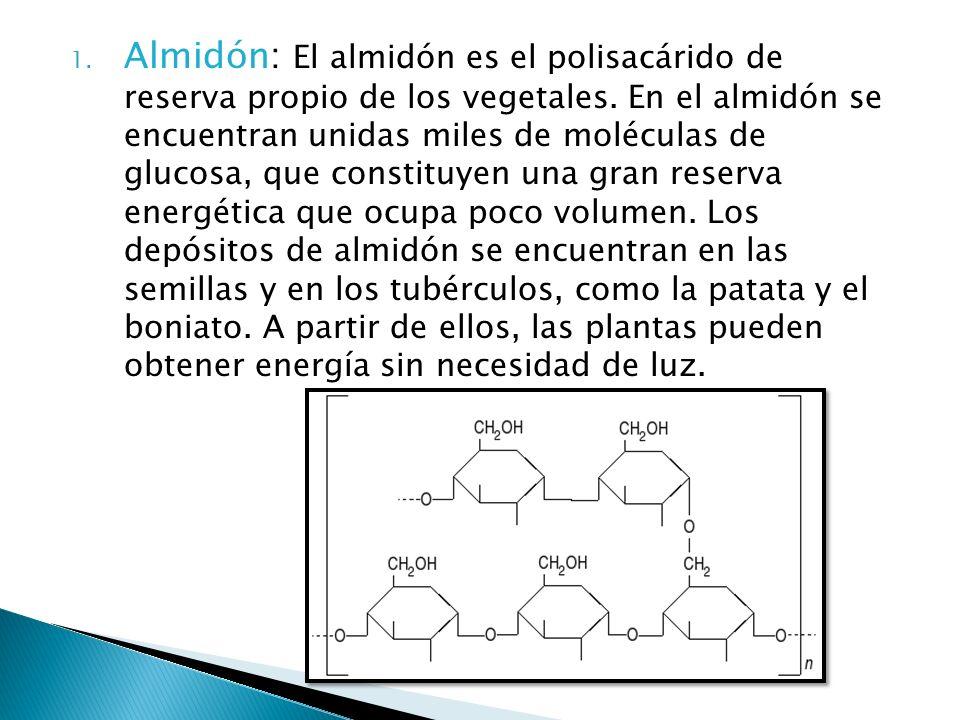 Almidón: El almidón es el polisacárido de reserva propio de los vegetales.