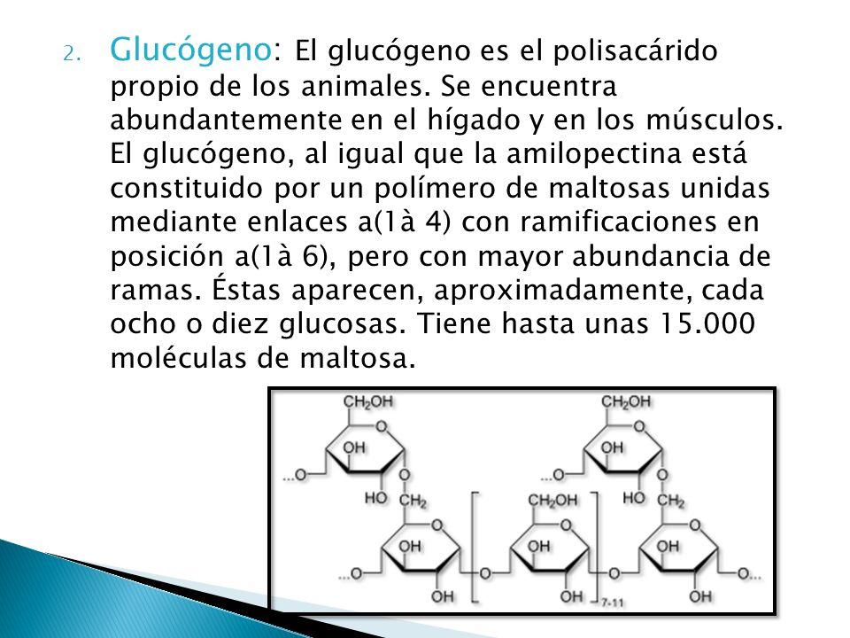 Glucógeno: El glucógeno es el polisacárido propio de los animales