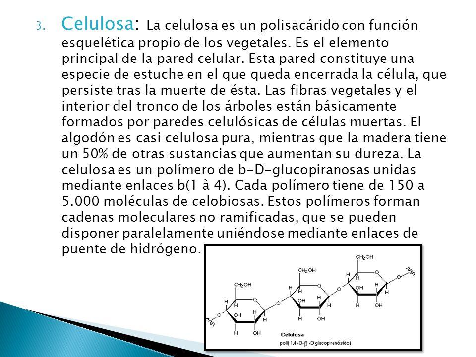 Celulosa: La celulosa es un polisacárido con función esquelética propio de los vegetales.