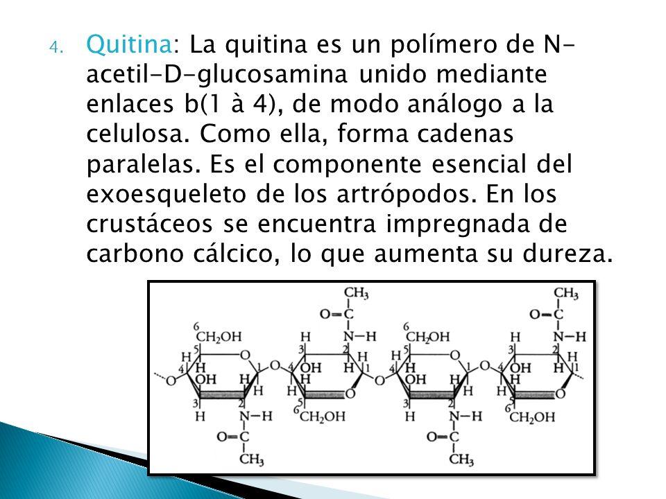 Quitina: La quitina es un polímero de N- acetil-D-glucosamina unido mediante enlaces b(1 à 4), de modo análogo a la celulosa.
