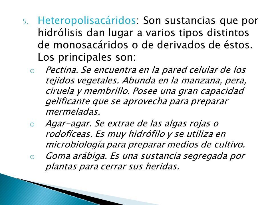 Heteropolisacáridos: Son sustancias que por hidrólisis dan lugar a varios tipos distintos de monosacáridos o de derivados de éstos. Los principales son: