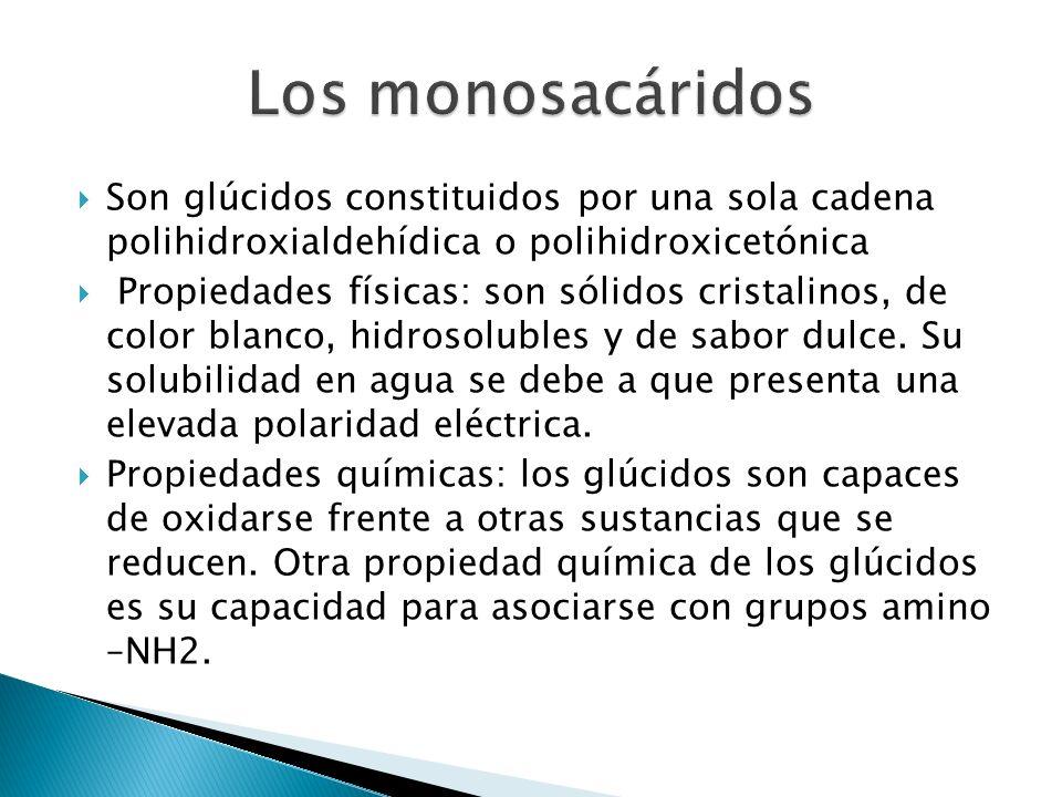 Los monosacáridos Son glúcidos constituidos por una sola cadena polihidroxialdehídica o polihidroxicetónica.