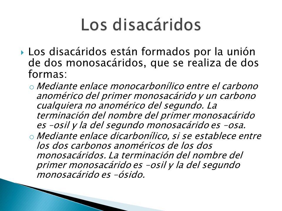 Los disacáridos Los disacáridos están formados por la unión de dos monosacáridos, que se realiza de dos formas: