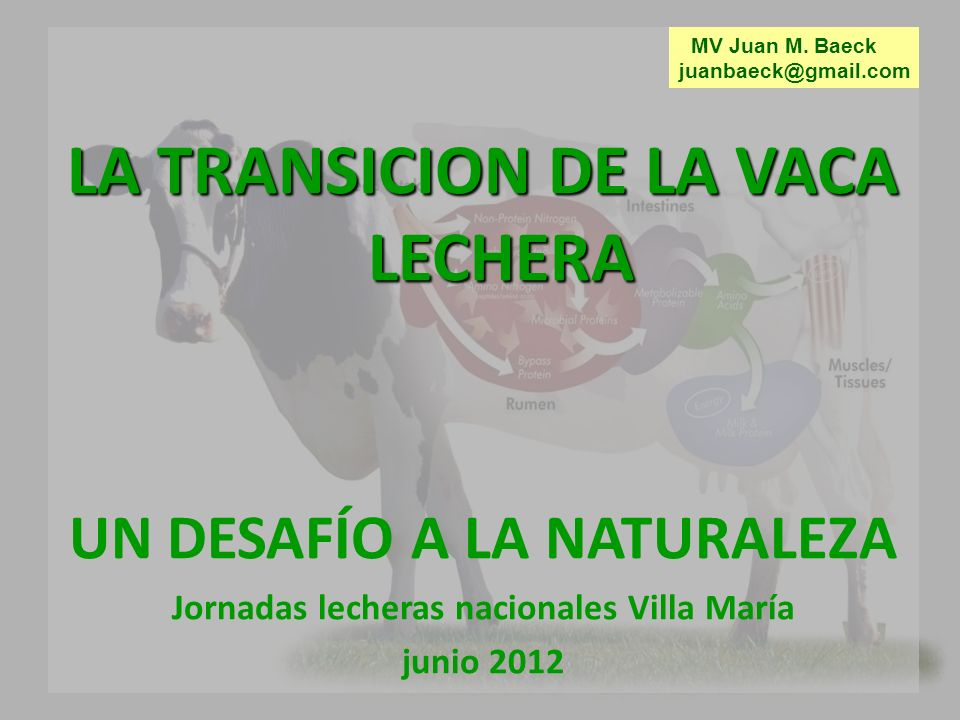 LA TRANSICION DE LA VACA LECHERA